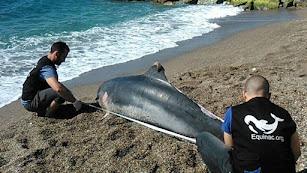 Dos miembros de Equinac junto a un delfín varado en Almería.
