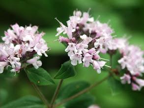 Photo: #floralfriday by +Tamara Pruessner  Siberia has the most wonderful wildflowers.