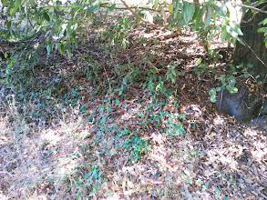 Photo: Bay leaf litter