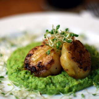 Seared Sea Scallops with Minted Sweet Peas.