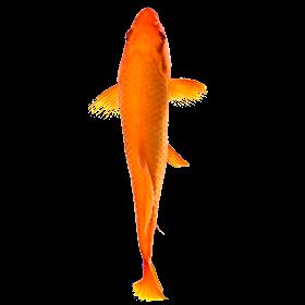 Рыба симулятор