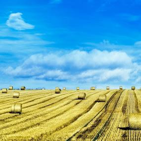 blue&amber by Anna Trandeva - Landscapes Prairies, Meadows & Fields