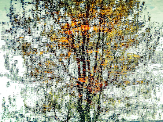 impressioni d' autunno di D. Costantini