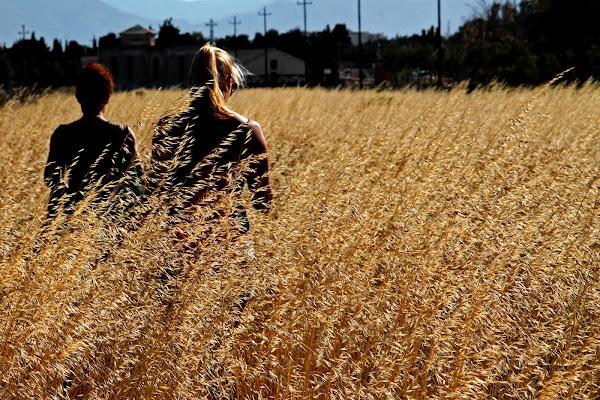 fields di fast.dp