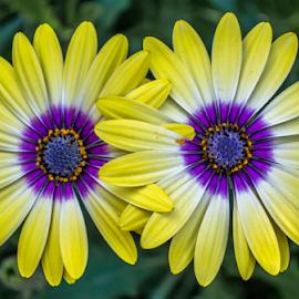 by Carola De Jager - Flowers Flower Gardens