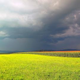 corn fields before the storm by Vladimir Krizan - Landscapes Prairies, Meadows & Fields