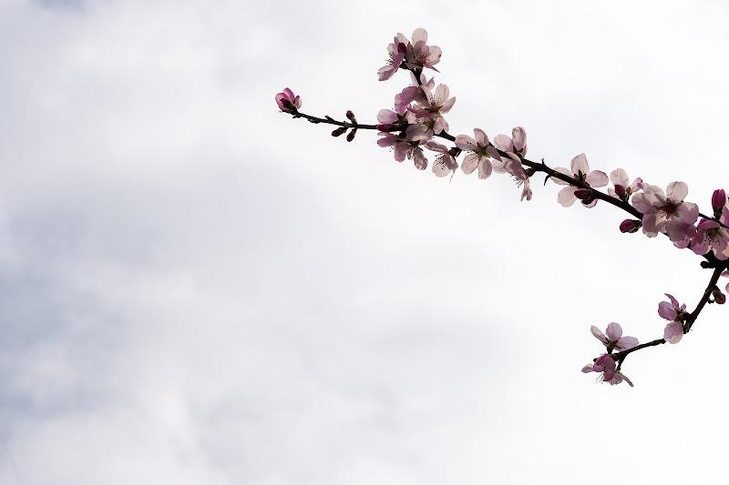 la prima fioritura di Giovi18