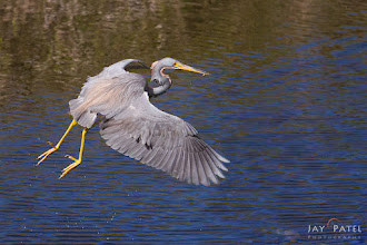 Photo: Catch of the Day, Everglades National Park, FL