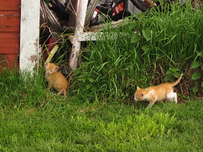 Photo: A little kittens too.