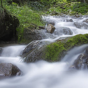 Flow by Ionut Stoica - Nature Up Close Water ( water, forest, romania, flow, morning, river )