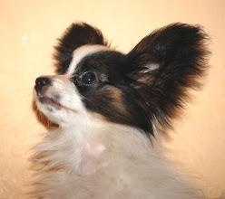 Photo: Arwen Sun for Drakonit 4 months old