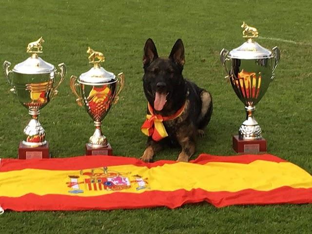 el pastor alemán gringo, con las tres copas conseguidas en el campeonato.