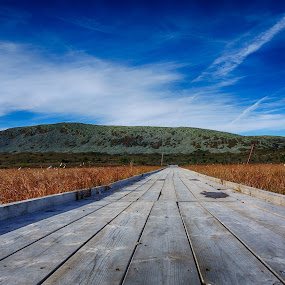 Where people walk by Tom Mehlum - Landscapes Mountains & Hills ( clouds, mountains, sky, wood, color, track, poeple )