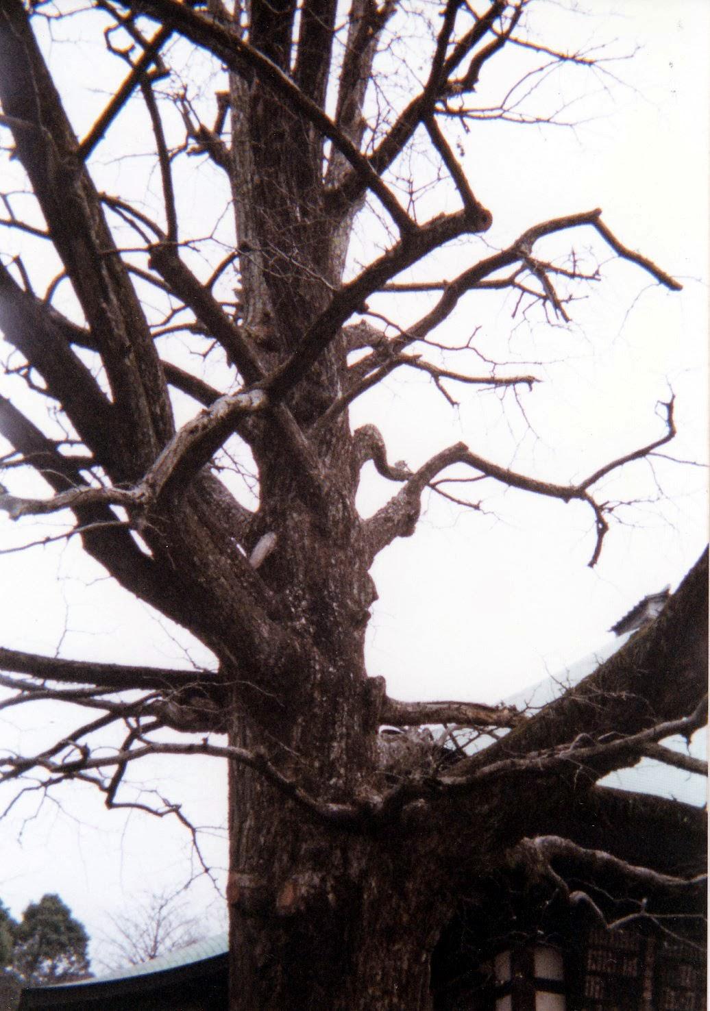 Photo: 九品仏浄真寺(東京都世田谷区) ©赤松幸吉  『愛染かつら』 http://inagara.octsky.net/aizen-katura-1938 (参考)