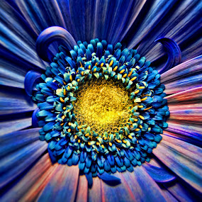The Blue Flower. by Konrad Ragnarsson - Nature Up Close Flowers - 2011-2013 ( plant, iceland, konni27, nature, blue, flower )
