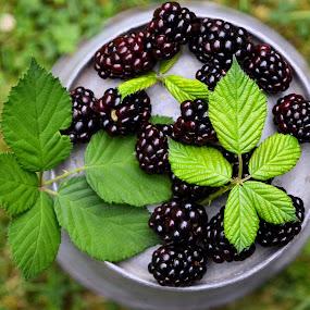 Blackberries by Heather Aplin - Food & Drink Fruits & Vegetables ( blackberry, berry, arrangement, fruit, autumn, green, summer, blackberries, leaves, black, soft,  )