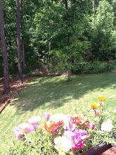 Photo: Craig and Michelle's backyard, Douglasville, GA