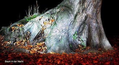 Photo: Baum in der Nacht
