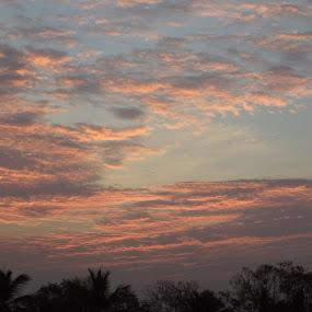 ________Wonderful Sunset________ by Karthish Waran - Landscapes Sunsets & Sunrises ( orange, sunset, trees, cloudy, evening )