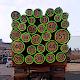 Объем лесоматериалов Download on Windows