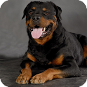 Rottweiler Pack 2 Wallpaper icon