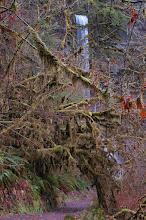 Photo: Silver Falls State Park - Winter Falls