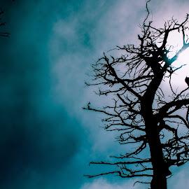 Treetop by Gayatri Prakash - Digital Art Abstract ( eerie, tree tops, blue sky, blue, tree, epic, scary,  )