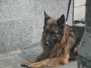 Photo: een hond die rustig op zijn baasje wacht
