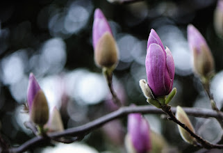 Photo: buds of spring