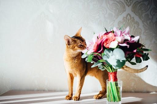 Wedding photographer Aleksandr Trivashkevich (AlexTryvash). Photo of 22.03.2017