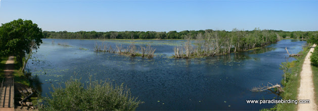 Photo: Brazos Bend State Park, west of Houston