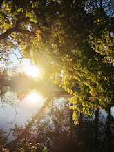 Photo: Green branches and sunlight over a lake at Eastwood Park in Dayton, Ohio.