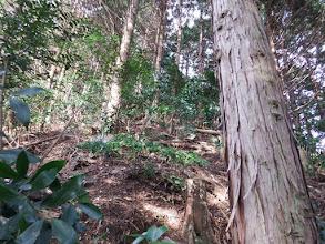 灌木を避けながら登る