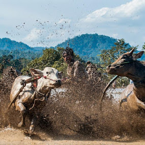 goyang cow....... by Taufik T KamaMoto - Sports & Fitness Rodeo/Bull Riding