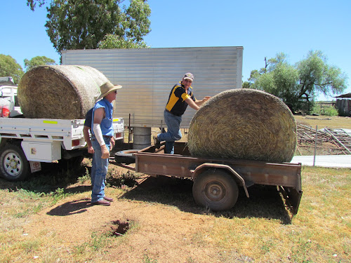 Injured firefighter Robert Groth watches on as Boggabri Rotarian Robert Breneger unloads a bale of hay at his property yesterday. Peter Hall is obscured behind Mr Groth. Inset, the truck which arrived from Warialda, with Bernie Martin, Jason Henry, Mr Hall and Mr Breneger standing in front.