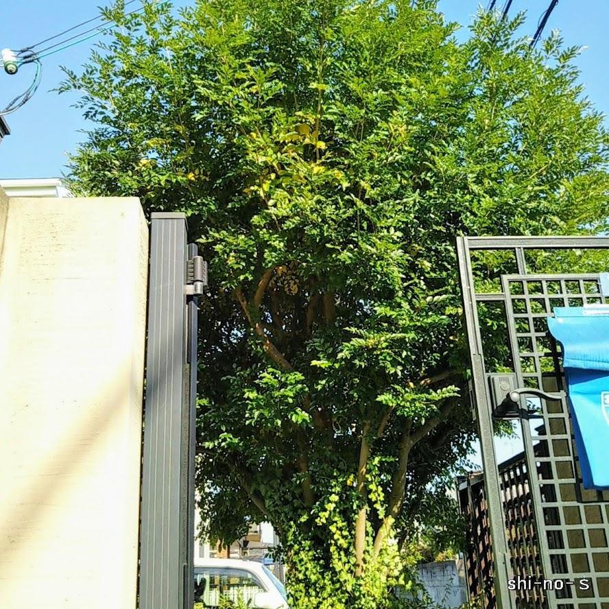植木を下から見上げる