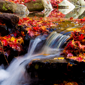 Autum is Magic by Keith Sutherland - Nature Up Close Water ( pure, fall stream with red and yellow leaves, clean, flowing water, fall autum water stream red leaves,  )