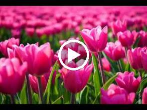 Video: A. Vivaldi  Op. 3 n. 10   Concerto for 4 violins, violoncello, strings   b.c. in B minor (RV 580) -