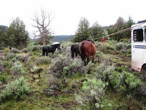 Photo: Rob's horses