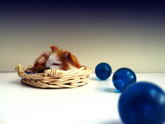 Blue Dreams di killerqueen
