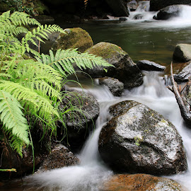Stones in the river by Gil Reis - Nature Up Close Rock & Stone ( places, nature, styones, bio, river, water, life )