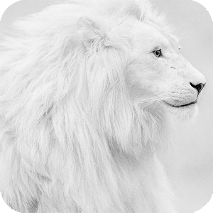 White Lion Hd Wallpaper 2 6 Apk Free Personalization Application Images, Photos, Reviews