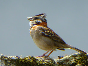 Photo: Sparrow at Rose Cottage