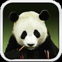 Panda Bear Live Wallpaper HD icon