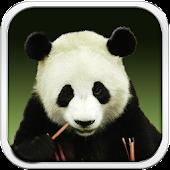 Panda Bear Live Wallpaper HD