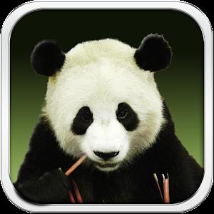 download panda bear live wallpaper hd for pc