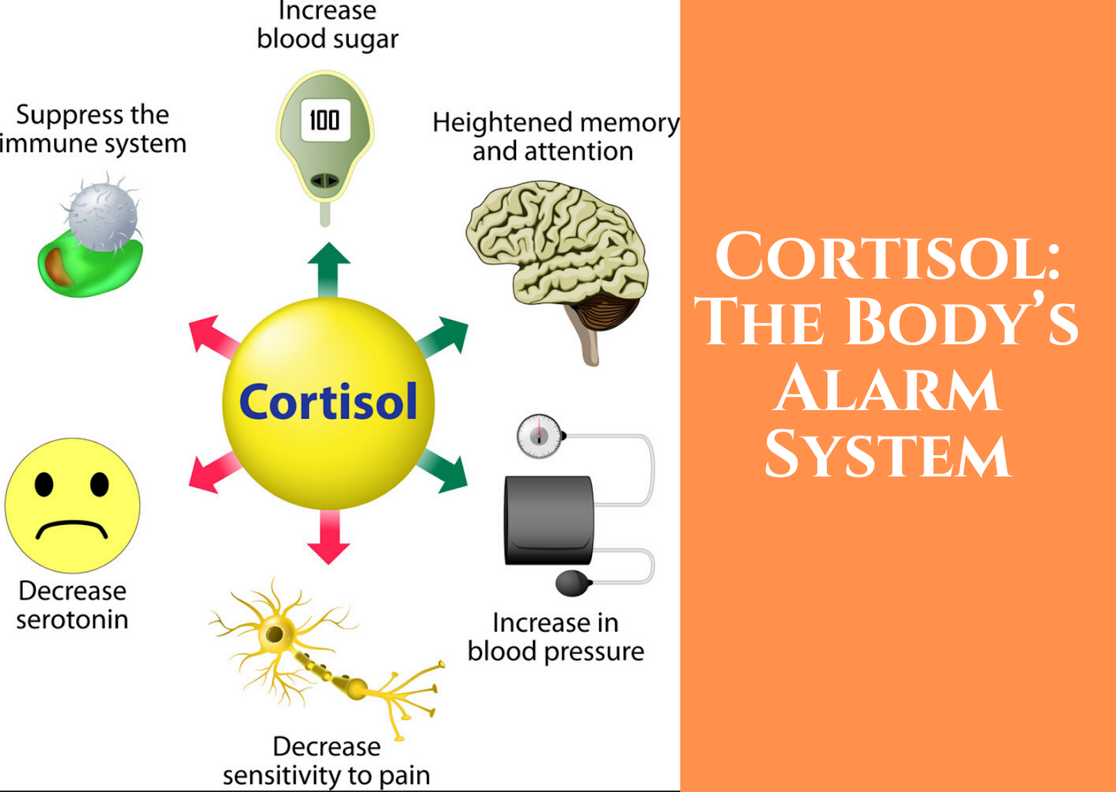 Get Control of Your Cortisol