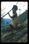 Papua. Tribes Baliem Valley Time Travel. Traditional Yani working his field. Note the koteka sticking out