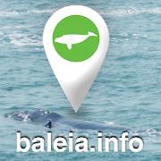 Baleia.info - Avistagens de Baleia Franca