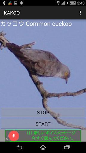 鳥鳴き声カッコウ